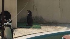 ぼっちでモテない孤独なペンギンに共感の声「俺かな」